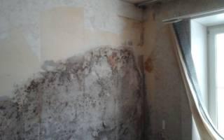 Плесень под обоями после ремонта что делать