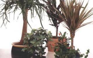 Растения для гидропонной стены